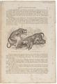 Macacus sinicus - 1700-1880 - Print - Iconographia Zoologica - Special Collections University of Amsterdam - UBA01 IZ20000033.tif