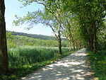 Mainau-forest.JPG
