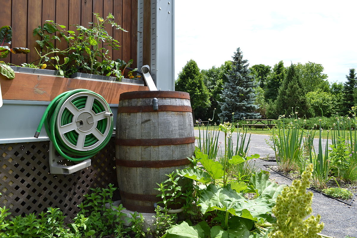 water harvesting Rainwater harvesting is an alternate water supply and stormwater management approach anyone can use harvested rainwater can be stored in rain barrels, large and small above-ground or below-ground cisterns, and ponds.