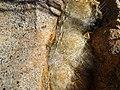 Mammillaria guelzowiana (5729910594).jpg