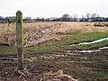 Marshland near Lower Snailham - geograph.org.uk - 1163428.jpg