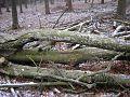 Mastbos forest, Holland - 2.jpg