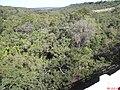 Mata na Entrada de Analândia - panoramio.jpg