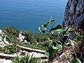 Mediterranean Steps 3.jpg