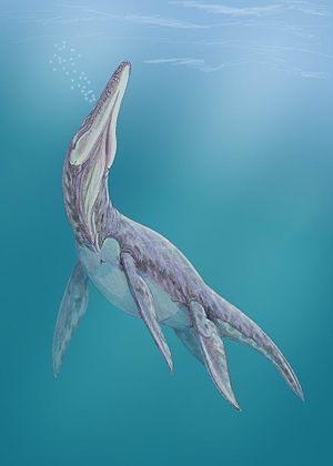 Megalneusaurus - Restoration