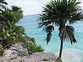 Mexico yucatan - panoramio - brunobarbato (7).jpg
