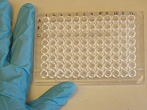 A 96-well microtiter plate being used for ELISA.