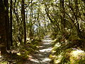 Milford Track through forest.jpg