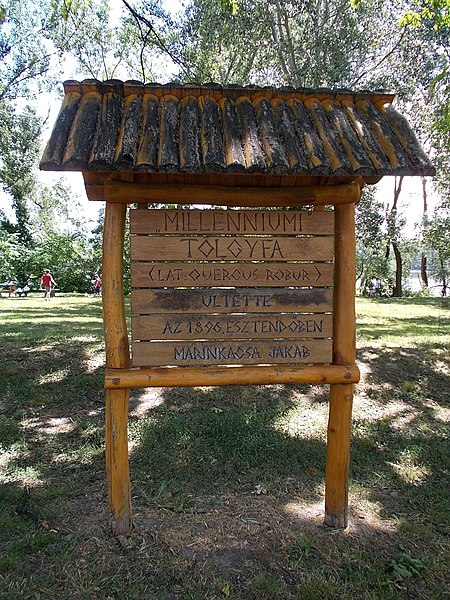 File:Millennium Oak sign, Old Town, 2020 Százhalombatta.jpg