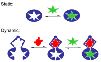 Molecular recognition - Static recognition between a single guest and a single host binding site. In dynamic recognition binding the first guest at the first binding site induces a conformation change that affects the association constant of the second guest at the second binding site. In this case it is positive allosteric system.