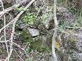 Molins de Balanyà - molí de més avall P1110974.JPG