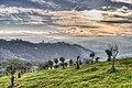 Montebabbio - Castellarano (RE) Italy - December 16, 2012 - panoramio.jpg