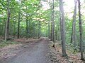 Morgan Arboretum 03.jpg