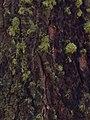 Moss on Bark.jpg