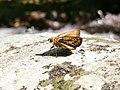 Moth in Isarog.jpg