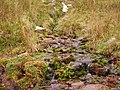 Mountain spring - geograph.org.uk - 1510366.jpg