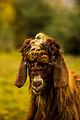 Mr. Goat.jpg