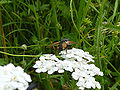 Mulfingen Insekt hinten rot 1.jpg