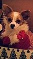 My dog Tank.jpg