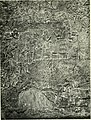 Myths and legends of Babylonia and Assyria (1916) (14779727674).jpg