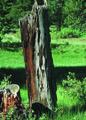 NRCSCO01030 - Colorado (1447)(NRCS Photo Gallery).tif