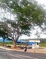 Nagavalli, Tumkuru (2).jpg