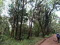 Nairobi Arboretum Park 44.JPG