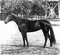 Nancy Hanks (horse).jpg