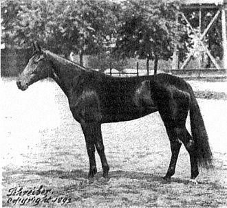 John E. Madden - Nancy Hanks in 1892.