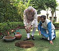 Narendra Modi planting a Kadamb sapling (Neolamarckia Cadamba), at the Race Course Road lawns, to mark the occasion of the World Environment Day, in New Delhi. The Minister of State for Environment.jpg