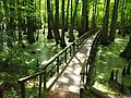 NatchezTraceParkway-Cypress Swamp1-Mile Post 122.jpg