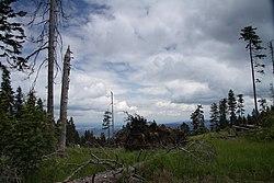 National nature reserve Boubinsky prales in 2011 (11).JPG