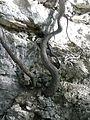 Nature - Natura (14781739919).jpg