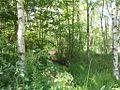 Naturschutzgebiet Tävsmoor Kreis Pinneberg (Schleswig-Holstein) 09.JPG
