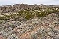 Near Berrenda Creek - Flickr - aspidoscelis (5).jpg
