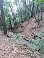 Nebental der Dürsch bei Broichhausen.jpg