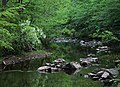 New Hope Creek with blooming fringetree.jpg