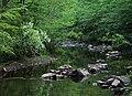 New Hope Creek with blooming fringetree.jpg