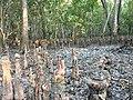 Nijhum dwip Botanical forest 2.jpg