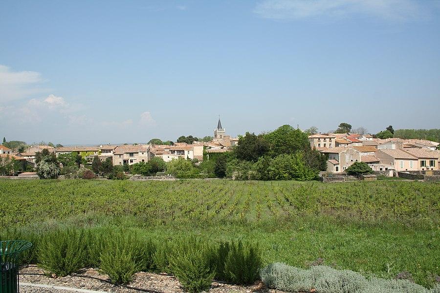 Nizas (Hérault) - vue générale.