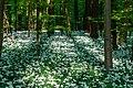 Nordkirchen, Naturschutzgebiet Ichterloh -- 2018 -- 2319.jpg