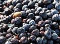 Olives tanche 2.jpg