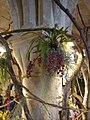 Orchidées à l'Abbaye de Vaucelles 6.jpg