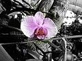 Orchidee by Madeleine Schäfer.JPG