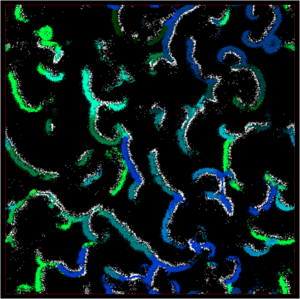 EcoSim - Image: Overview simulation