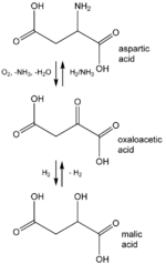 anabolic reactions coupled with atp synthesis