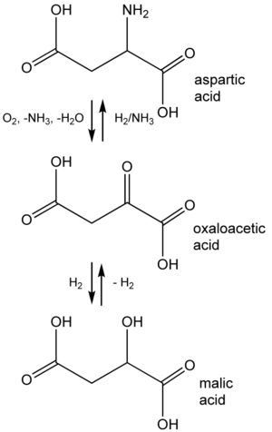 Oxaloacetic acid - Relationship of oxaloacetic acid, malic acid, and aspartic acid