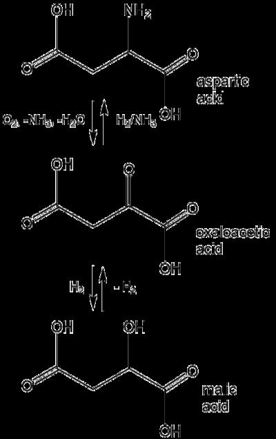 酸 アスパラギン シャトル 酸 リンゴ