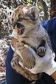 P6 Kitten (8971370054).jpg