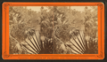 Palmetto Landing, Oklawaha River, Fla, from Robert N. Dennis collection of stereoscopic views.png